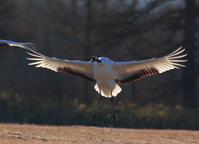 crane601