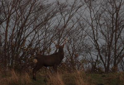 deer500