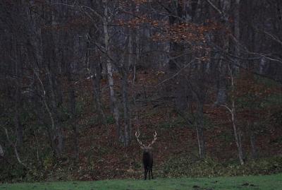 deer502