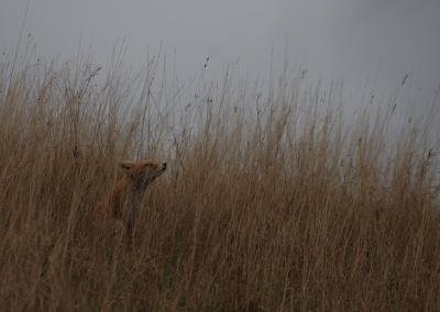 fox500