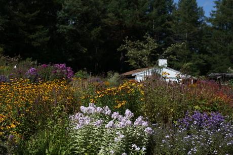 garden1153