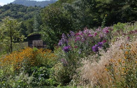 garden1154