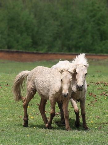 horse1106