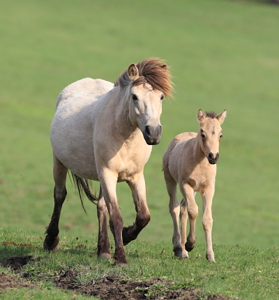 horse1107