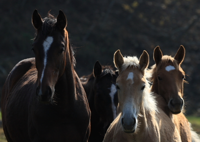 horse501