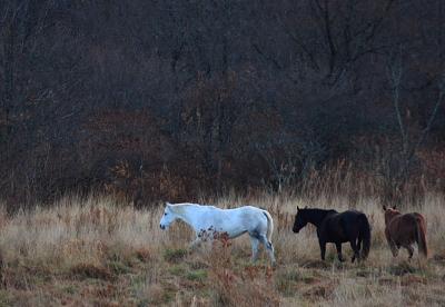 horse505