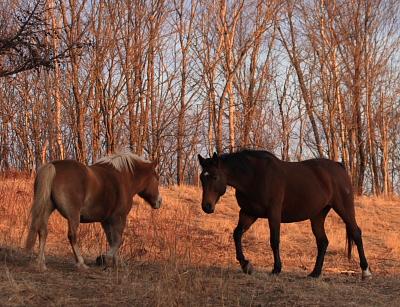 horse509