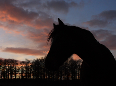 horse511