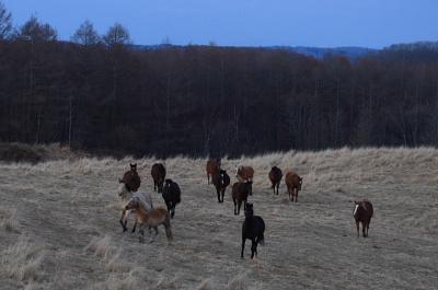 horse513