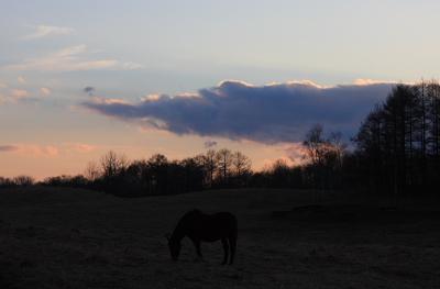 horse514