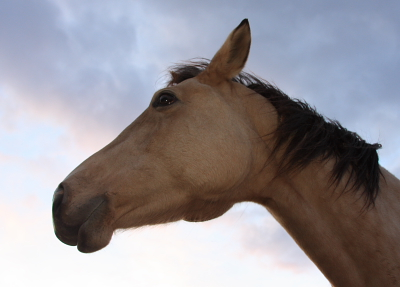 horse515