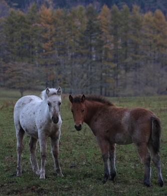 horse516
