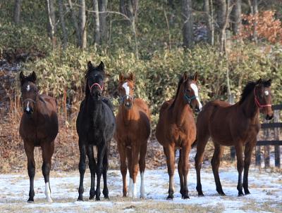 horse518