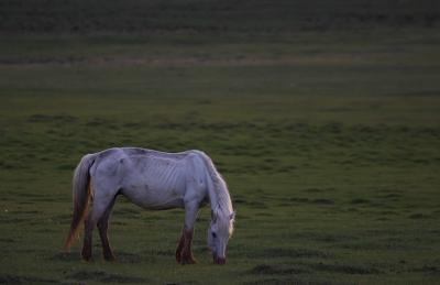 horse609