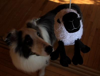 sheep501