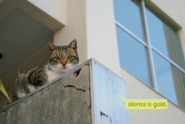 写真 作品集 猫