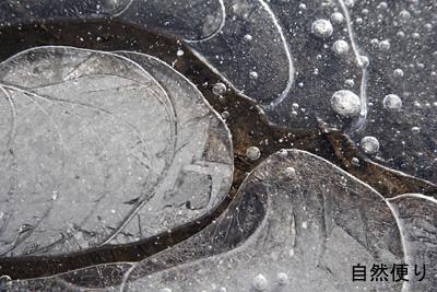 凍った水たまり