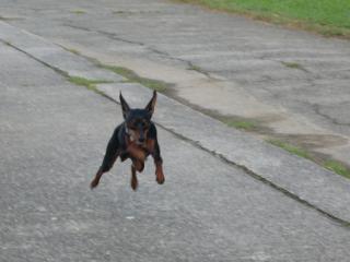 走りすぎて止まらない!!