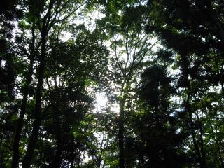森林浴~~