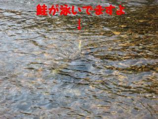 IMG_80871.jpg