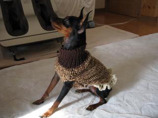 作りかけのセーター試着です