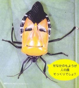 ジンメンカメムシさん