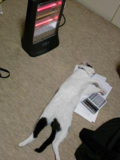 暖かいからノビノビ