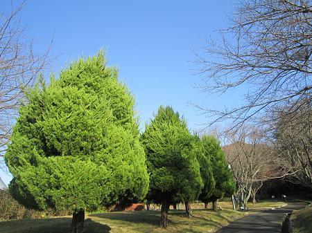 青空と緑の木