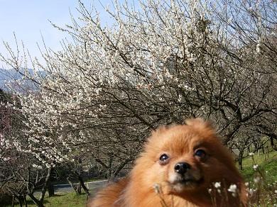 梅とりおん