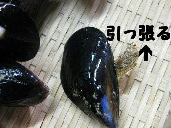 ムール貝のひげ
