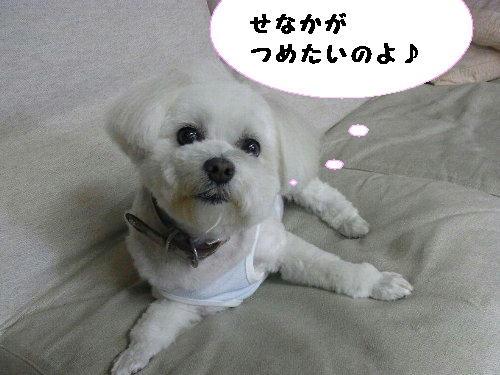 RIMG00862.jpg