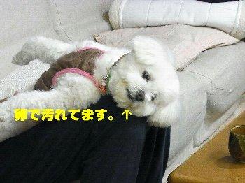 hanna_20110621001655.jpg