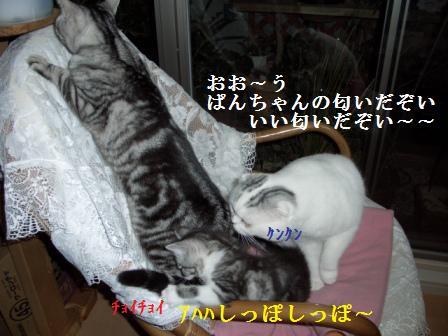 006_20071225211253.jpg