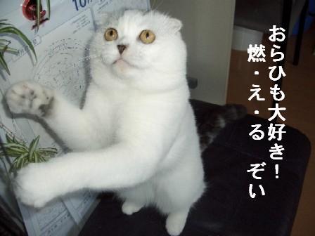 ねこ10月28日(日) 002