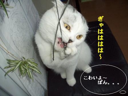 ねこ10月28日(日) 006