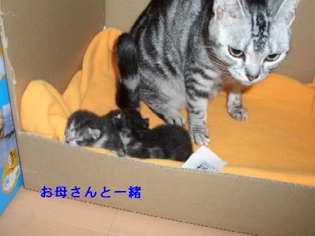 ねこ10月30日(火) 010