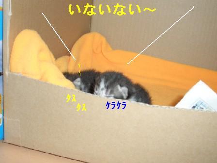 ねこ10月30日(火) 011