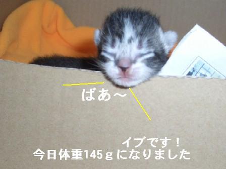 ねこ10月30日(火) 015