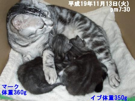 ねこ11月13日(火) 067