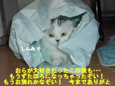 ねこ11月9日(金) 027