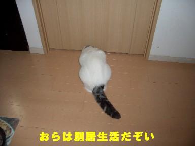 ねこ11月19日(月) 006