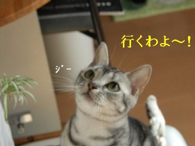ねこ11月20日(火) 084