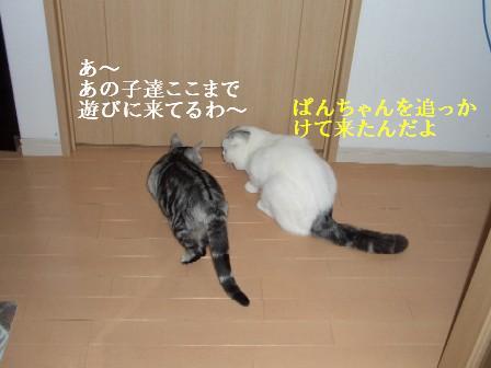 ねこ11月21日(水) 001