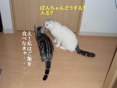 ねこ11月21日(水) 002