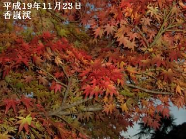 11月23日(金)香嵐渓・なばなの里 006