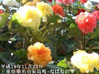 11月23日(金)香嵐渓・なばなの里 100