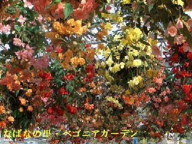 11月23日(金)香嵐渓・なばなの里 105