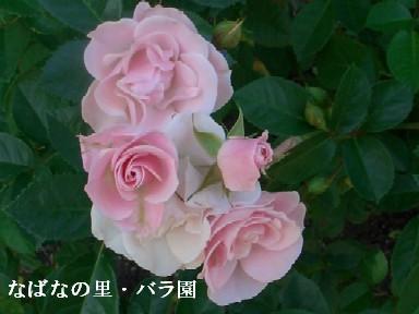 11月23日(金)香嵐渓・なばなの里 268