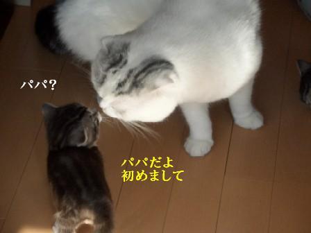 ねこ11月22日(木) 036