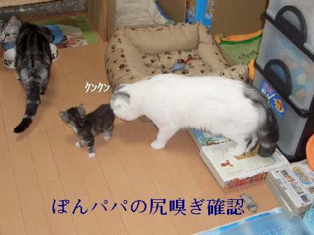 ねこ11月24日(土) 010